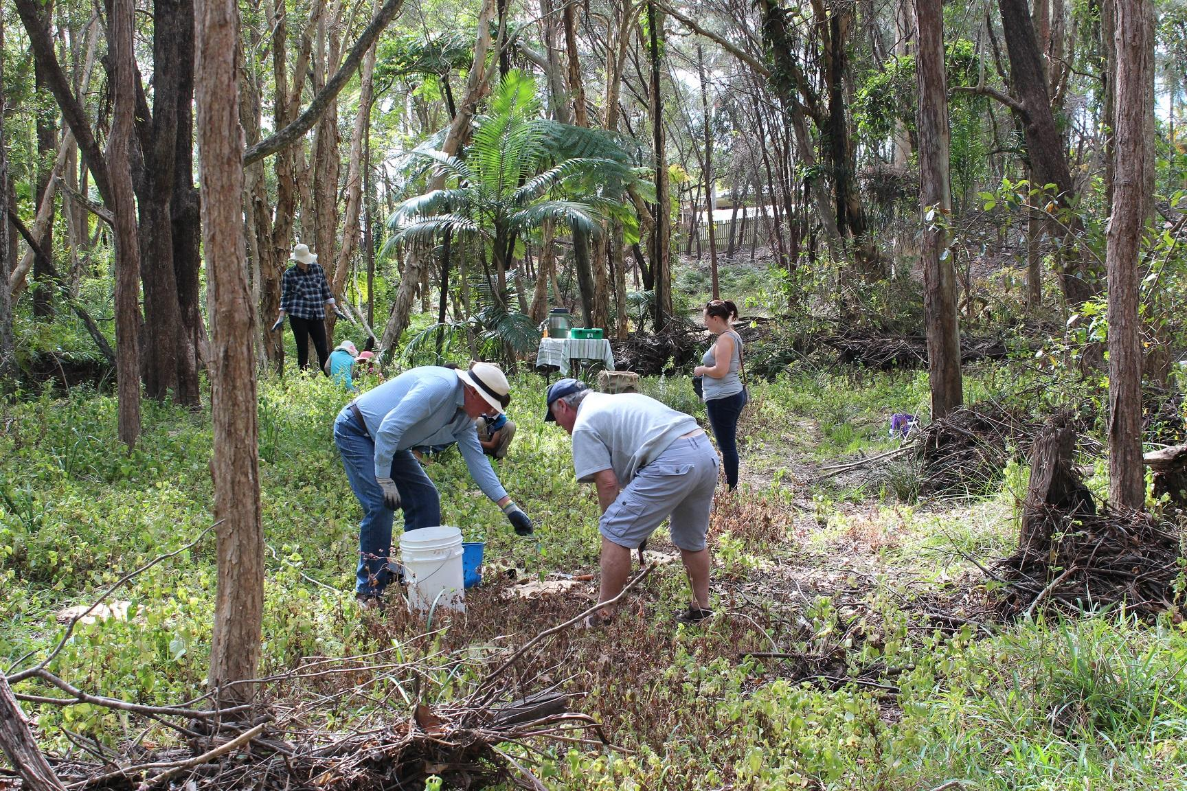 Redlands Bushcare - caring for the bush