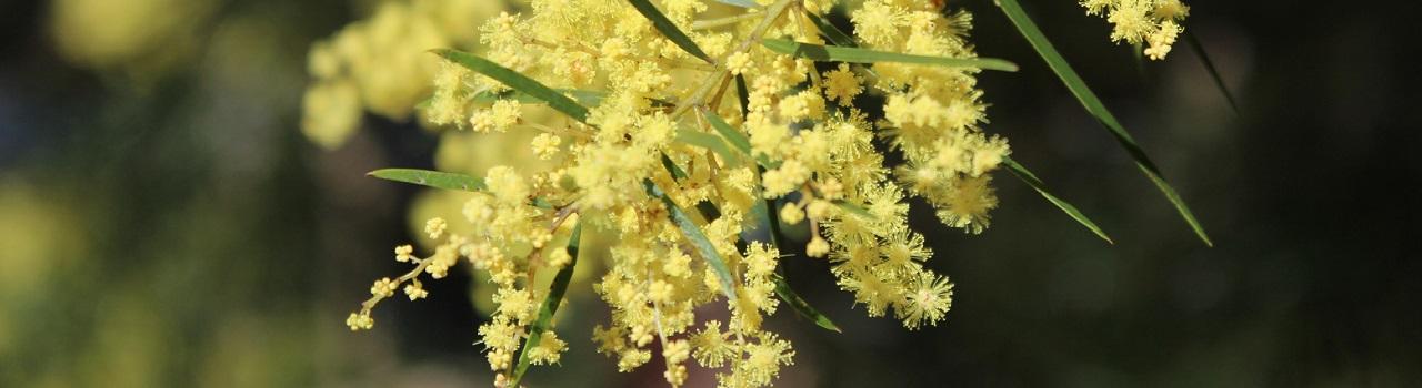 Gardening to help native Redlands animals and plants